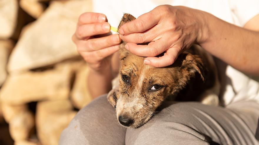 Un perro siendo acariciado