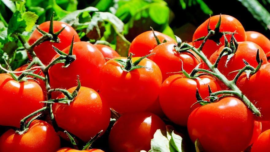 El tomate, protagonista de la feria.