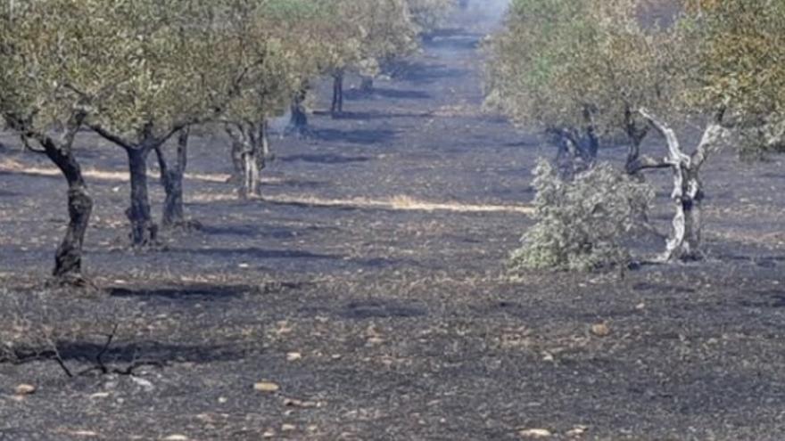 Efectos del incendio ya controlado en Valverde del Fresno