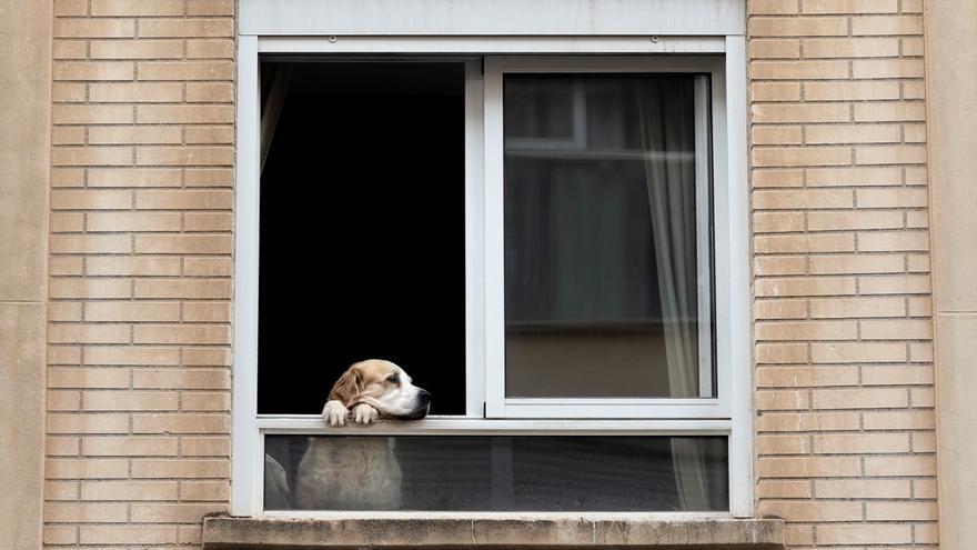 Un perro observa la calle desde una ventana de una vivienda. EFE/Biel Aliño/Archivo