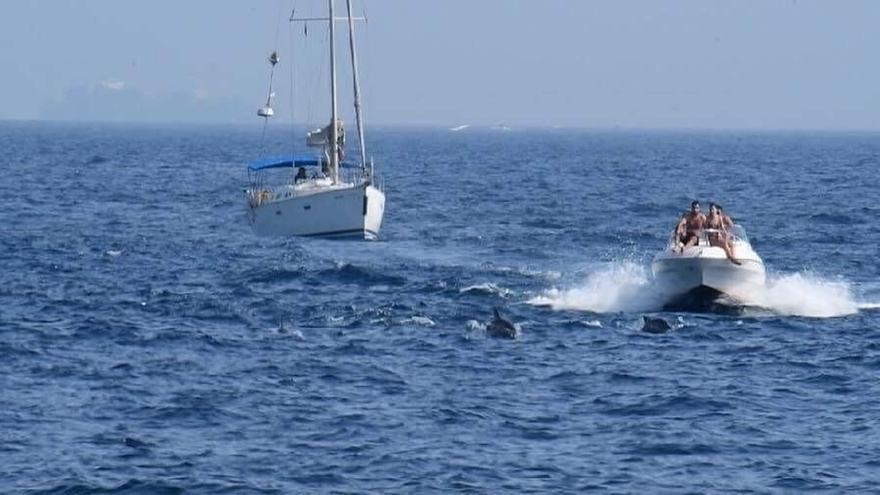 """Verdemar critica el """"elevado"""" número de embarcaciones para avistar delfines en la Bahía de Algeciras"""