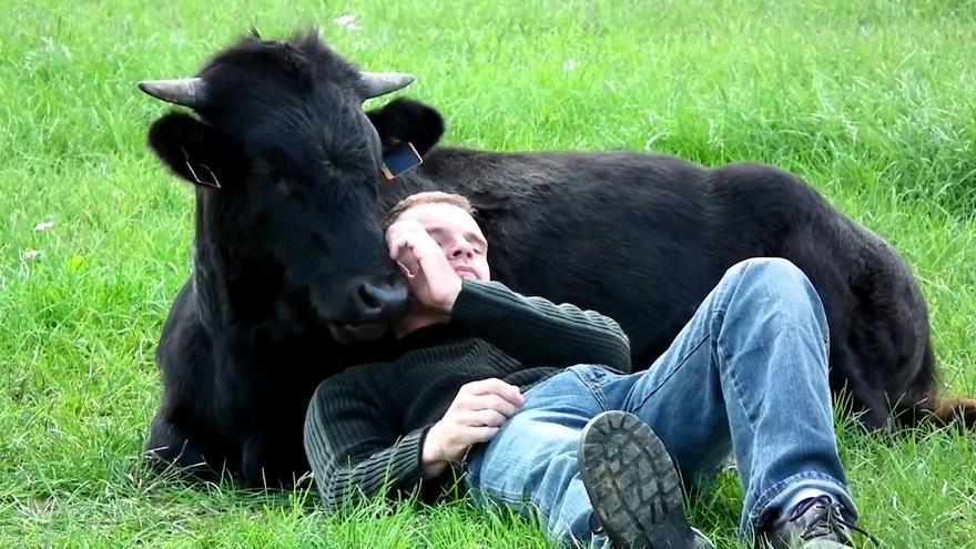 "Fadjen, toro español ""de lidia"", y el francés Christophe Thomas, que lo rescató y adoptó."