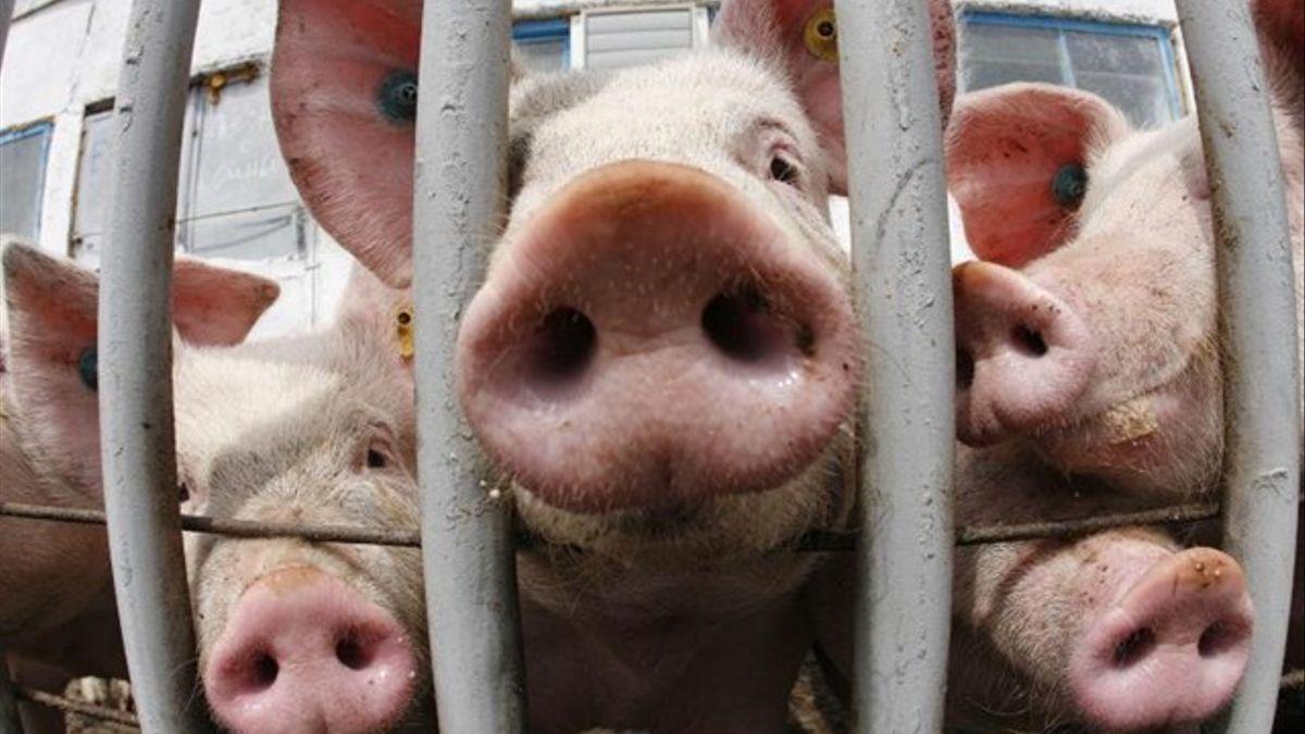 La demanda y las cotizaciones de carne de cerdo están cayendo en picado tras cinco años de crecimiento vertiginoso.