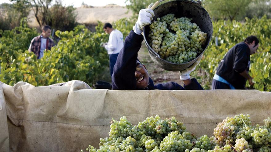 Socios trabajadores en las viñas de L'Olivera. FOTO: L'OLIVERA
