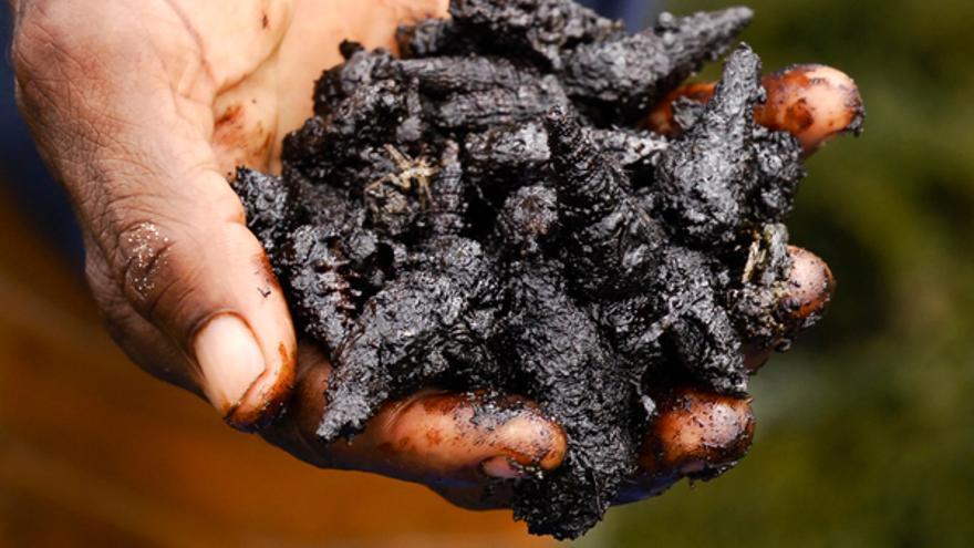 Moluscos muertos y cubiertos de barro contaminado en la ciudad de Bodo, Nigeria, mayo de 2011. © Amnistía Internacional