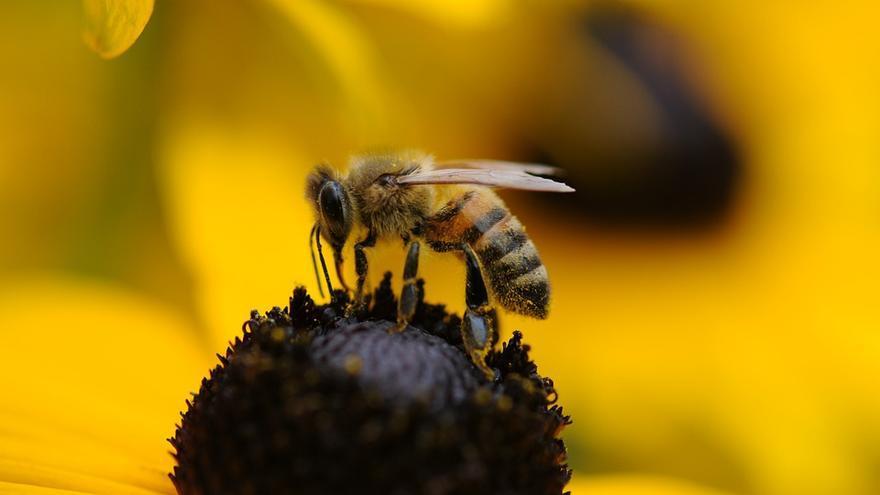 Abeja polinizando una flor.