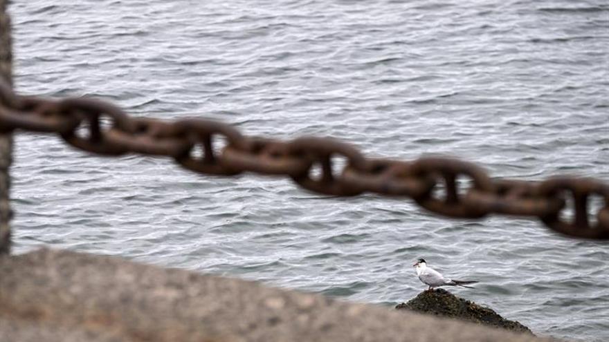 Un ejemplar de charrán común en las rocas cercanas a la Base Naval de Las Palmas de Gran Canaria (EFE/ÁNGEL MEDINA G.)