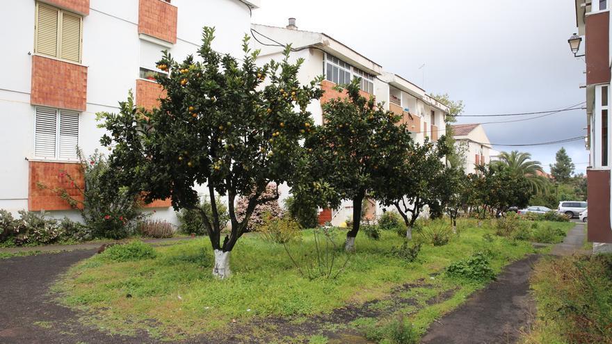 Árboles frutales en una urbanización en San Mateo. (Alejandro Ramos)