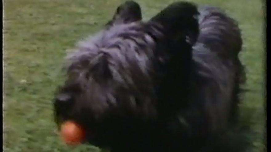 Floc, el perro de Janine y de Anne Gallimard
