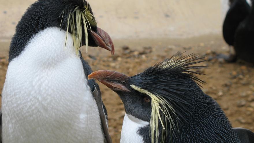 El adorable Penguin penalizó a los que hacían 'linkbuilding' dejando comentarios 'spam' (Foto: scoobygirl en Flickr)