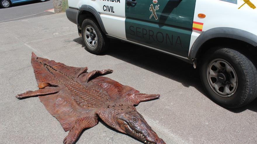 Piel de cocodrilo recuperada por agentes del Seprona en Tenerife
