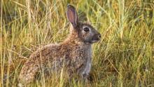 Proanimal recurre la autorización de la caza de conejos en Castilla-La Mancha durante el estado de alarma