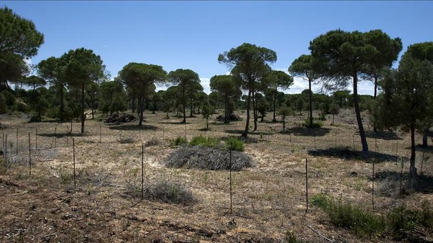 Un estudio internacional alerta sobre la amenaza del cambio climático en Doñana