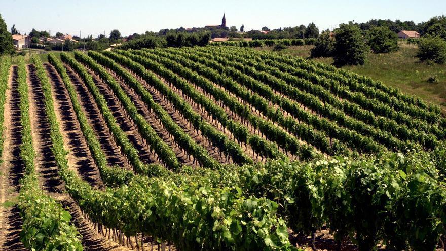 Imagen de Vacquiers. © Maison des vins Fronton.