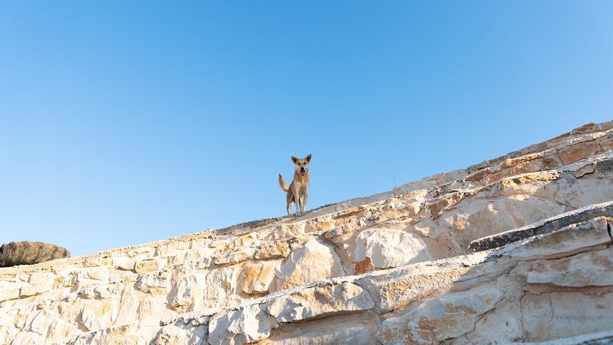 Un perro en lo alto de un muro