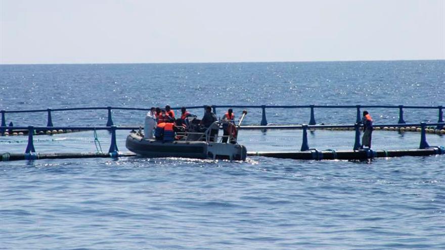 La OIM informa del rescate en el Mediterráneo de 44 migrantes que se dirigían a España