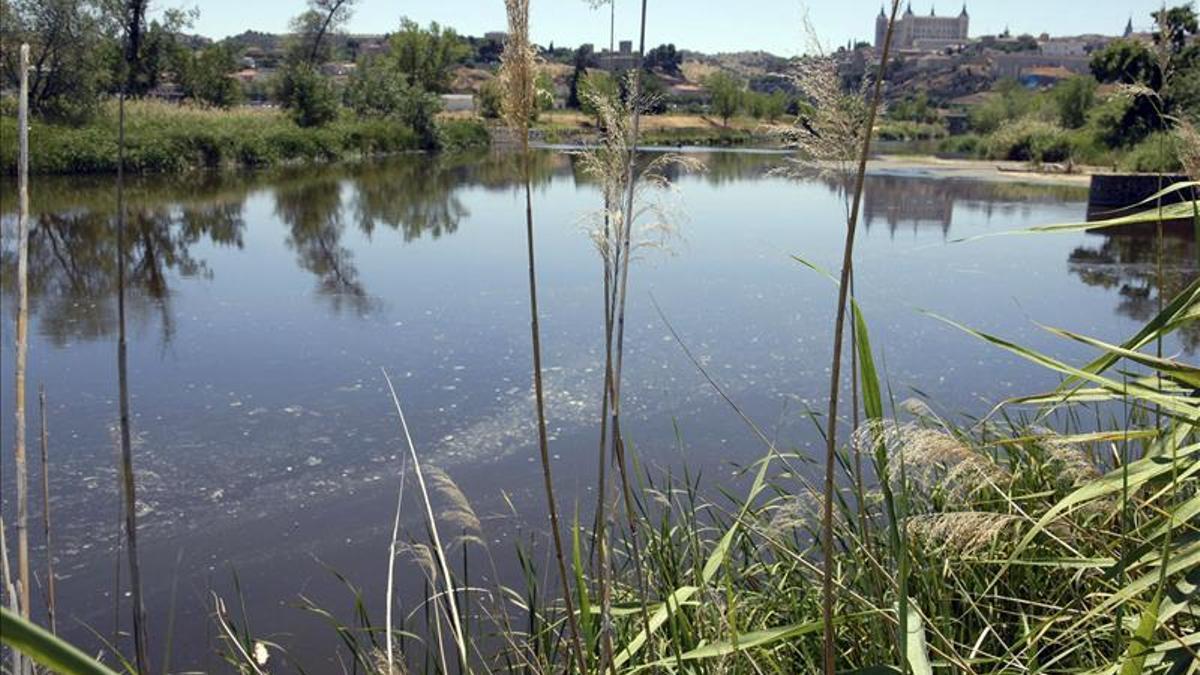 """Un estudio señala que el Tajo """"no funciona como río"""""""