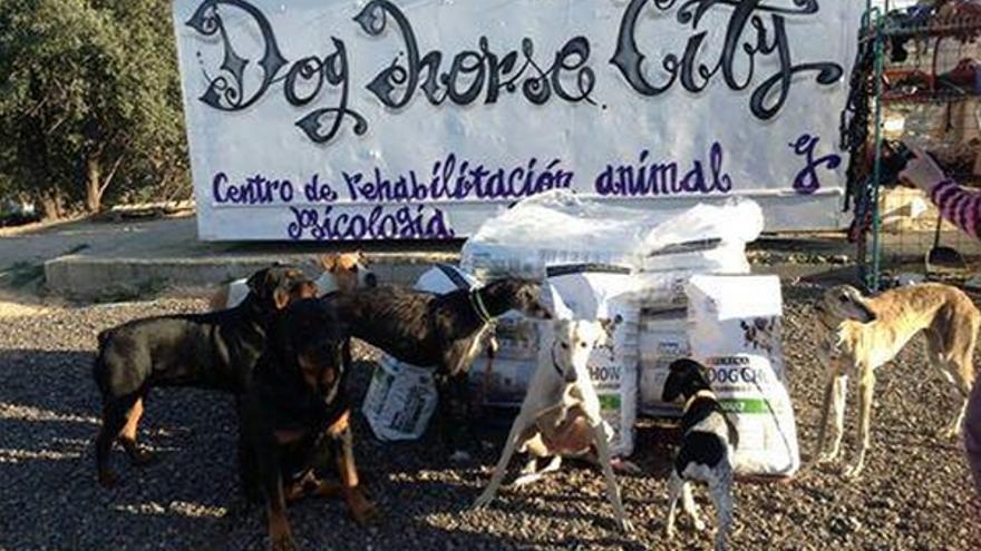 Protectora Dog Horse City / Foto: Twitter