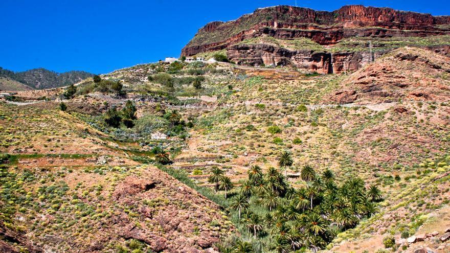 Palmerales junto a la Mesa de Acusa, en la isla de Gran Canaria. VIAJAR AHORA