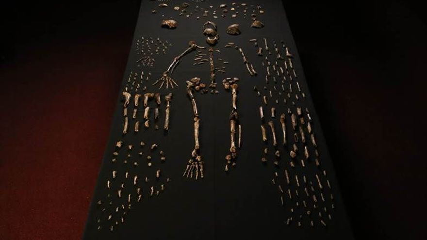 Reconstrucción de un esqueleto del 'Homo nadeli'.