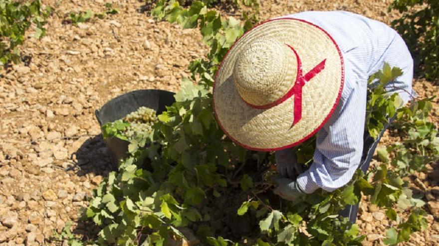La Interprofesional del Vino estima una cosecha corta y se muestra optimista ante los signos de recuperación del mercado