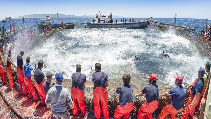 La almadraba de hoy se hace en alta mar a la manera 'levantina'. Julio González (EFE)