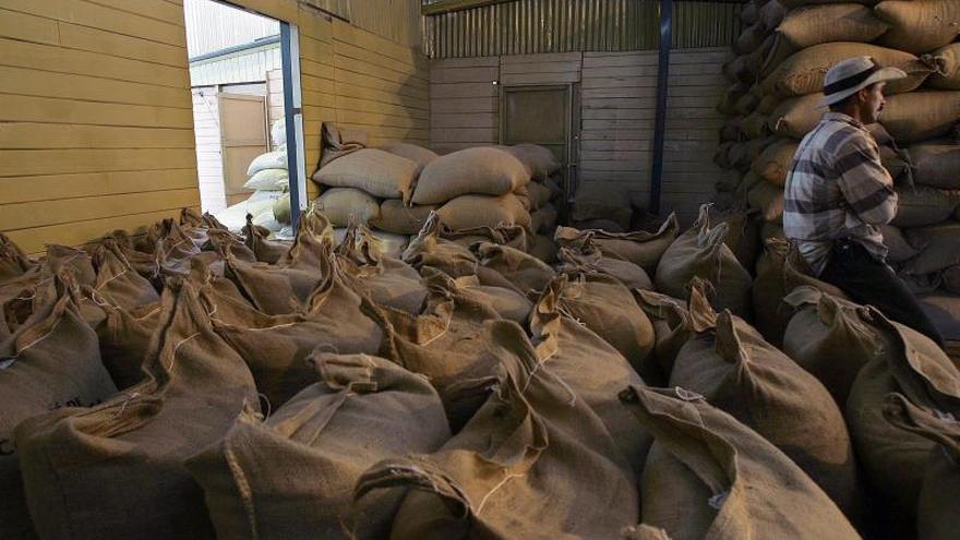 Brasil exporta café a ritmo de récord en 2019 pese a la caída en noviembre