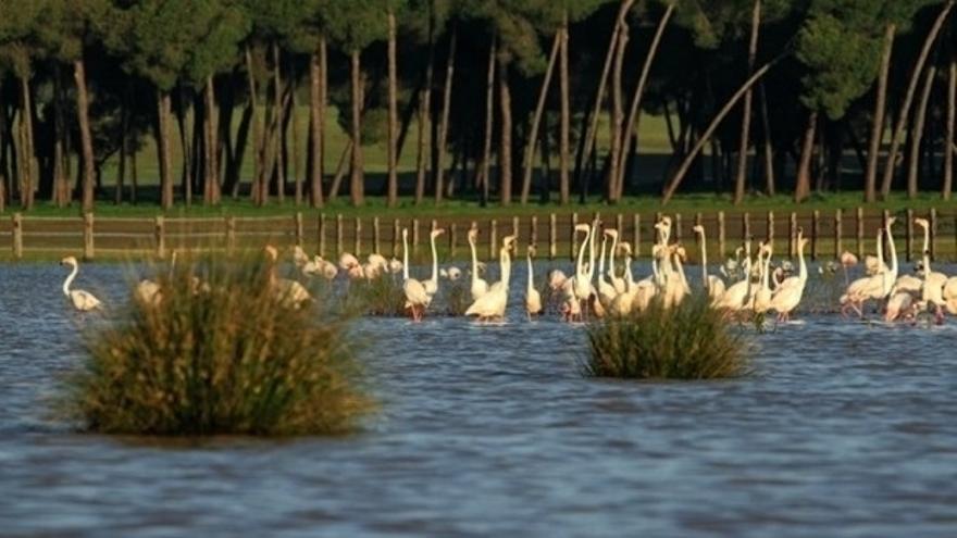 """WWF se opone a la intención del Gobierno de conceder una """"amnistía temporal"""" a los pozos ilegales de Doñana"""