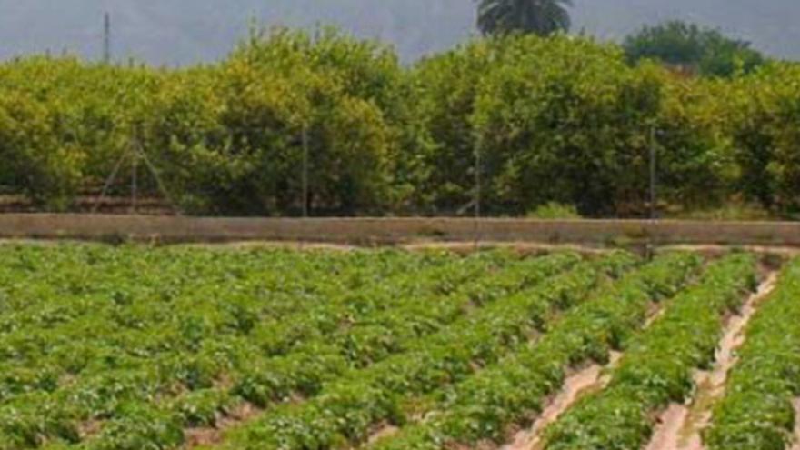 """Presentación  """"Huerta de Murcia: hacia un sistema agropolitano sostenible y resiliente"""""""
