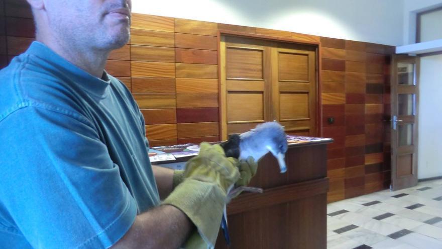 En la imagen, Félix Medina, con uno de los pollos entregado este jueves en las dependencias del Cabildo. Foto: MARÍA VICTORIA HERNÁNDEZ.