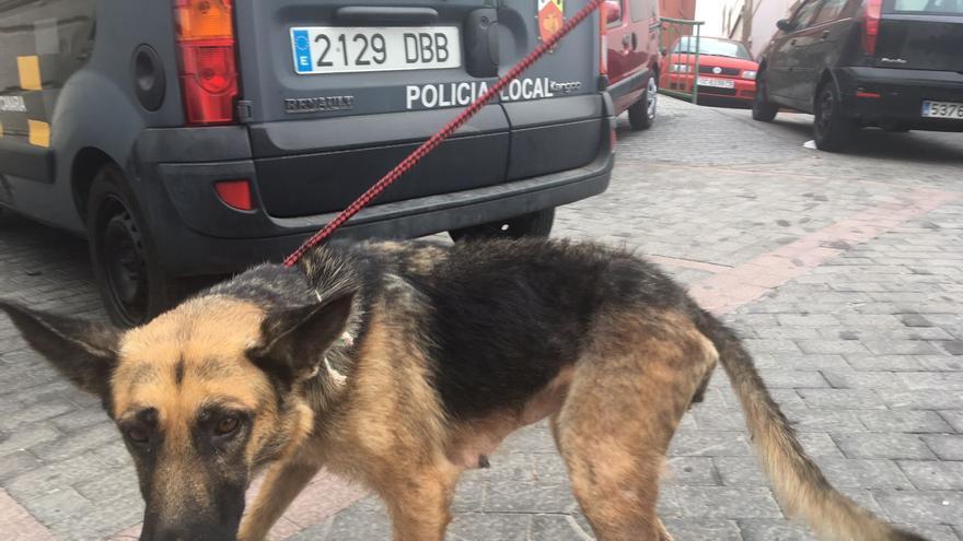 Perro rescatado en Las Palmas de Gran Canaria por la Policía Local