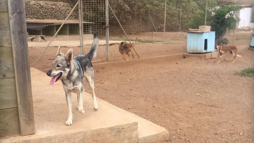 Perros acogidos en la protectora 'El Juaclo'.