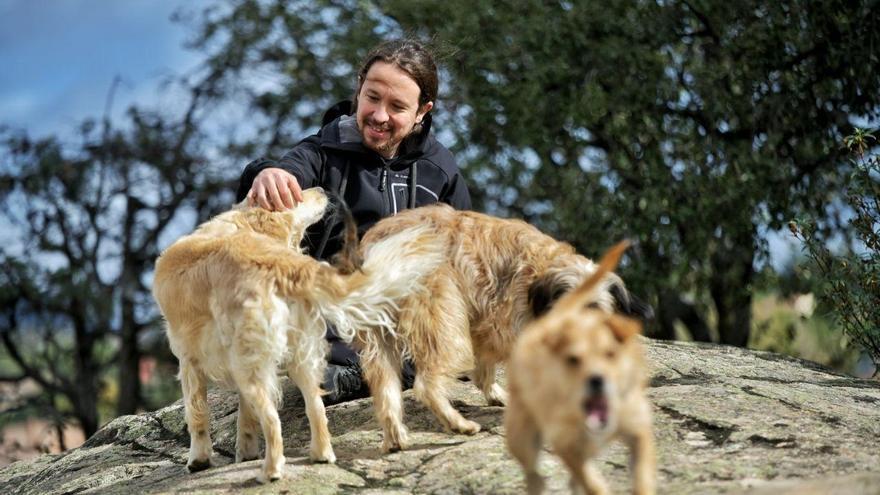 Archivo - Pablo Iglesias junto a sus perros durante la jornada de reflexión del 10N