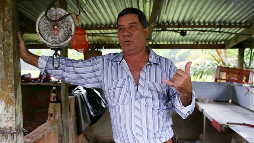 Arawana, el pez de la buena suerte de los japoneses que se cría en Colombia