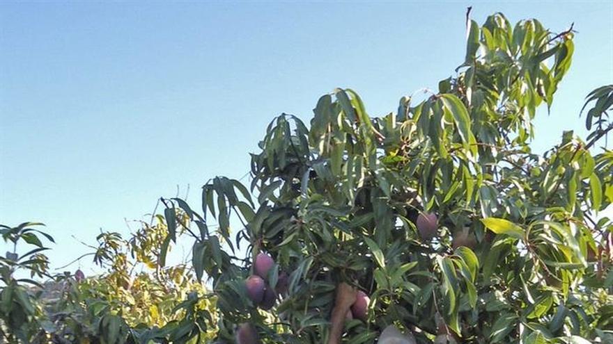 La PAC devolverá 55,8 millones de la reserva de crisis a los agricultores españoles