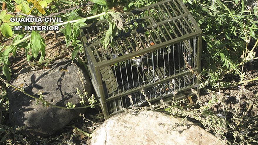 La Guardia Civil investiga a una persona en Ciudad Real por capturar aves con métodos prohibidos
