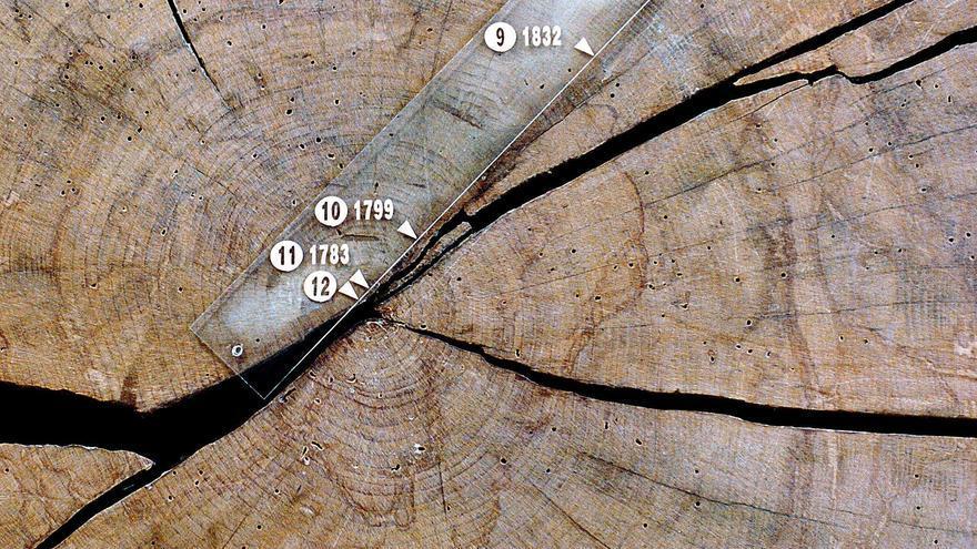 Narrar  la historia de la humanidad a través de los anillos de los  árboles