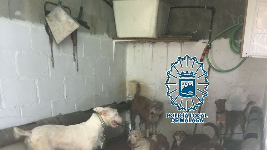 Denunciada una residencia canina en Málaga y a varios propietarios de perros por el mal cuidado