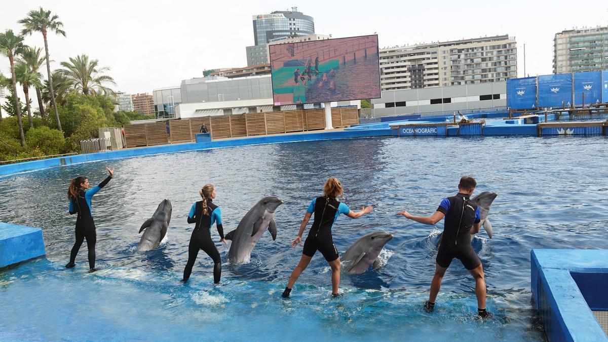 Delfines del Oceanogràfic