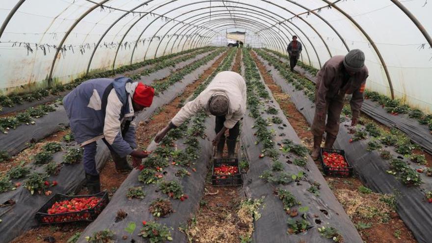 """África, ante una """"crisis económica sin precedentes"""" y una oportunidad única."""
