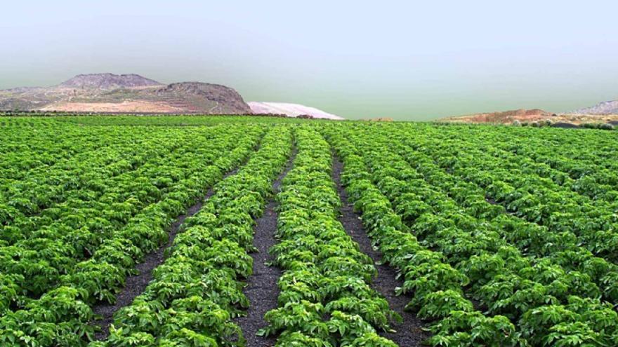 El acceso es libre hasta completar el aforo, pero se requiere previa inscripción en www.agrolanzarote.com