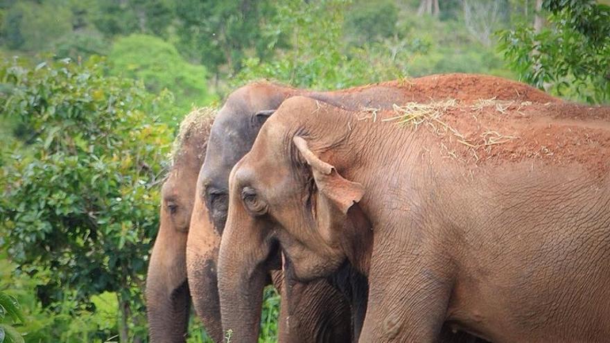 A los tres días de llegar al santuario, Mara ya había establecido un vínculo de cercanía con otras dos elefantas, Rana y Maia