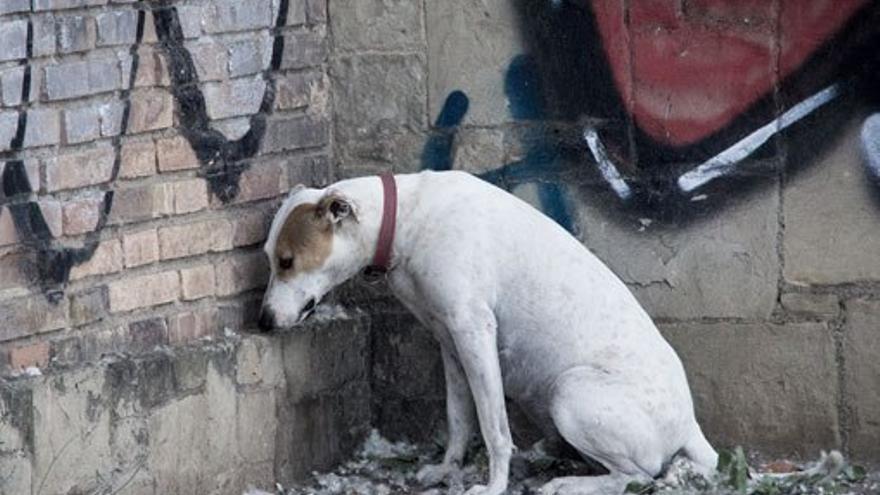 Perro deprimido. (CA).