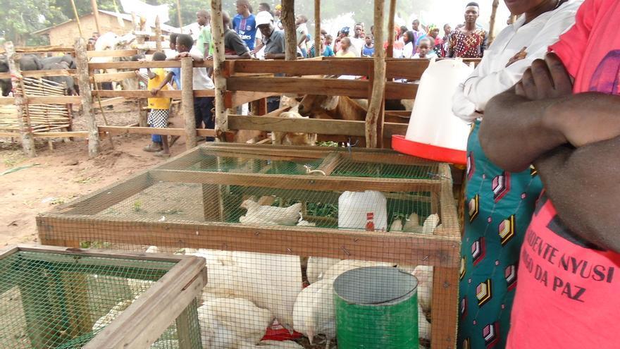 Madre Coraje y Gobierno de Navarra trabajan con 250 familias de Mozambique en apoyo a una alimentación adecuada