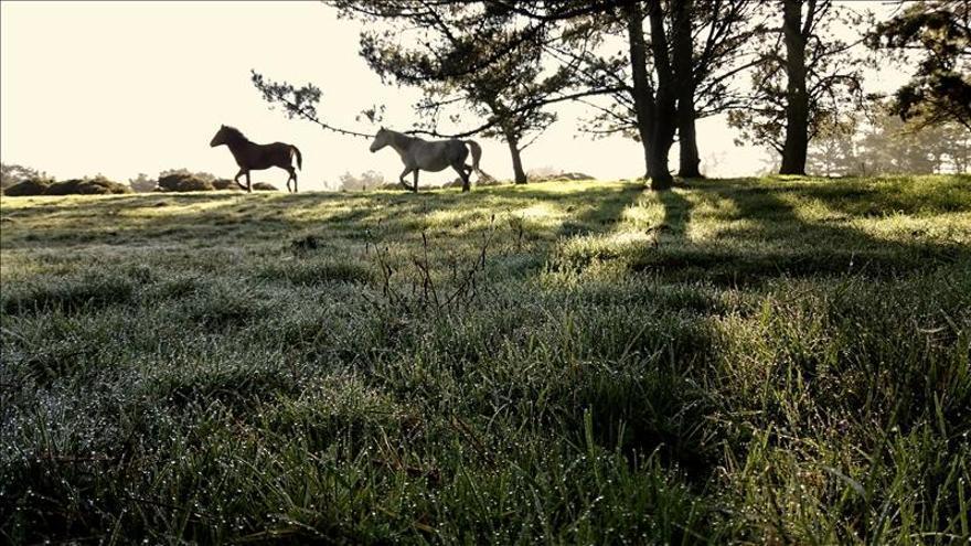 La Audiencia de Palma libera al hombre preso desde octubre por matar un caballo
