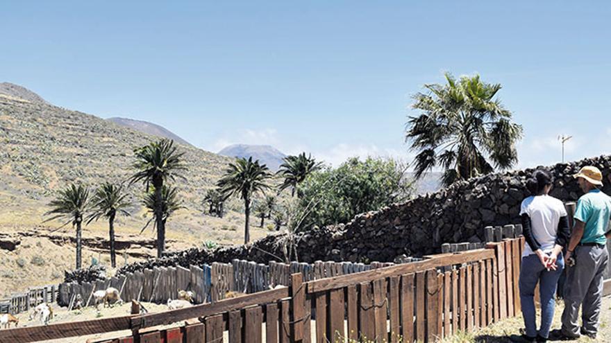 Granja de cabras la Pastora de Haría, situada en el barranco de Los Castillos (DIARIO DE LANZAROTE)