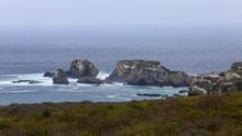 Alertan en Galápagos por el descubrimiento de muchas más especies invasoras