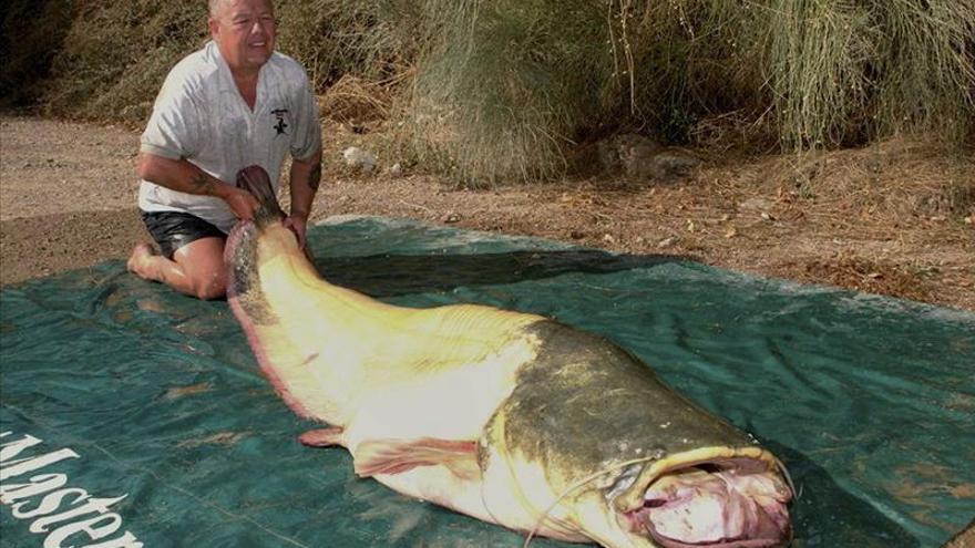 """Un ciudadano británico pesca un siluro albino en el Ebro que podría ser """"récord mundial"""""""