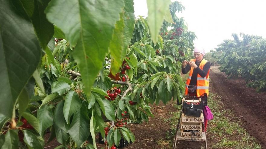 Se apoyará a 16 empresas en el acondicionamiento de alojamientos destinados a trabajadores temporales del sector agropecuario