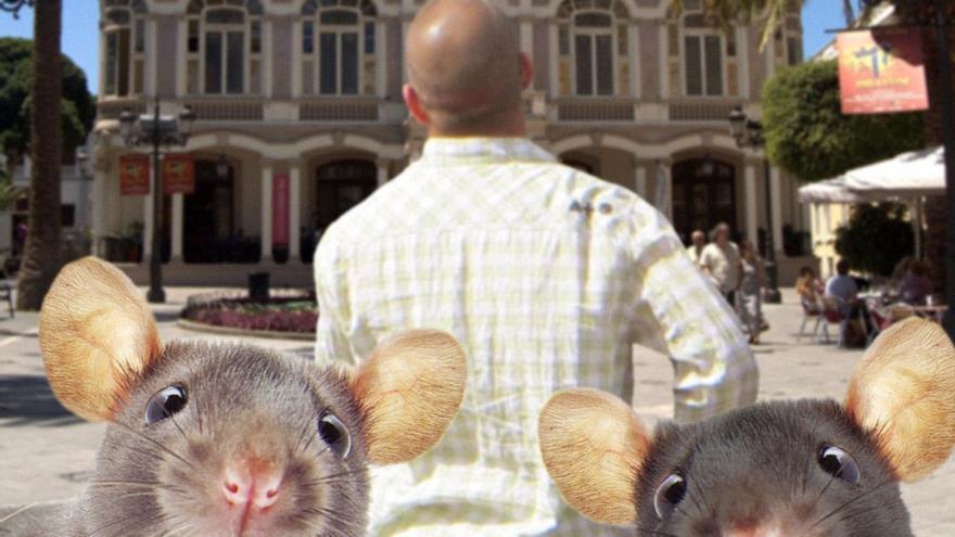 Según estadísticas, por cada canario hay 7 ratas.